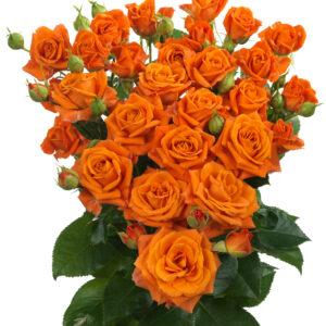 Orange Fire (hr)